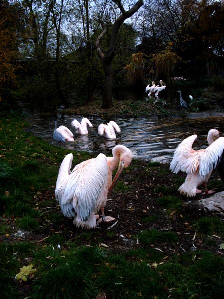 pink_birds